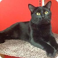 Adopt A Pet :: Janet - Merrifield, VA