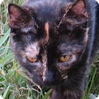 Adopt A Pet :: Marmalade - Gonzales, TX