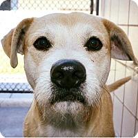 Adopt A Pet :: Ollie - Austin, TX