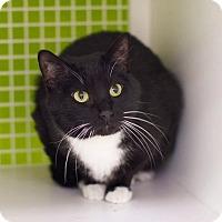 Adopt A Pet :: Faygo - Troy, MI