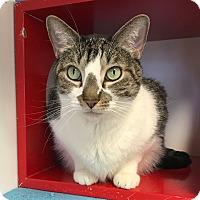 Adopt A Pet :: Kai - Colorado Springs, CO