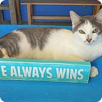 Adopt A Pet :: Oscar - Glendale, AZ