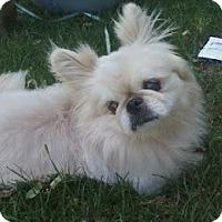Adopt A Pet :: Chester - Chantilly, VA