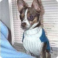 Adopt A Pet :: Cody - Mooy, AL