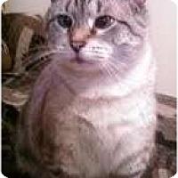 Adopt A Pet :: CeCe - Alexandria, VA