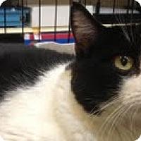 Adopt A Pet :: Diasy - Modesto, CA