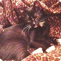 Adopt A Pet :: Danielle - Pasadena, CA