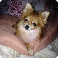 Adopt A Pet :: Bonita - Arcadia, FL