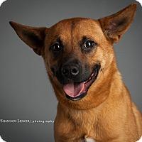 Adopt A Pet :: Morris - Nashville, TN