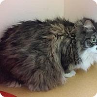 Adopt A Pet :: Maggie - Hudson, NY