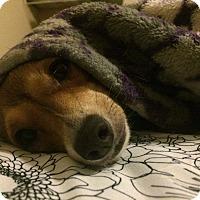 Adopt A Pet :: Fanny - Killian, LA