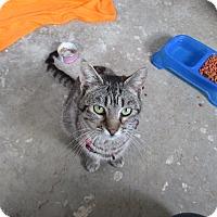 Adopt A Pet :: Freda - Glenpool, OK