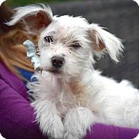 Adopt A Pet :: Priscilla - Austin, TX