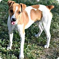 Adopt A Pet :: Dodger - Dodson, MT