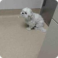 Adopt A Pet :: A843855 - Martinez, CA