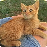 Adopt A Pet :: Oscar - Salisbury, NC