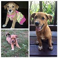 Adopt A Pet :: Vega - Longview, TX