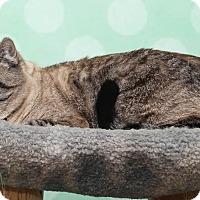 Adopt A Pet :: Stella3 - Chippewa Falls, WI
