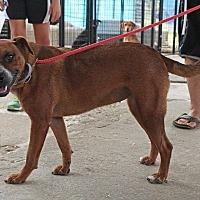 Adopt A Pet :: Kit - Leslie, AR