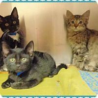 Adopt A Pet :: 3 LITTLE KITTENS- 1 tabby left - Marietta, GA