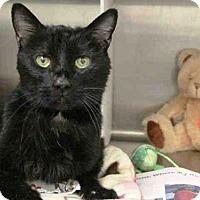 Adopt A Pet :: GOMEZ - Anchorage, AK