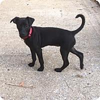 Adopt A Pet :: Tabby (ETAA) - Hagerstown, MD