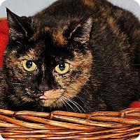 Adopt A Pet :: Polly - Gatineau, QC