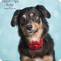 Adopt A Pet :: Polly - Chandler, AZ