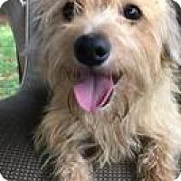 Adopt A Pet :: Ginger Snap - Weston, FL