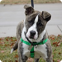 Adopt A Pet :: Hermey - Columbia, IL