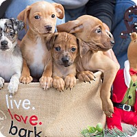 Adopt A Pet :: DIAMOND - Inland Empire, CA