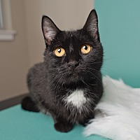 Adopt A Pet :: Twinkles - Wilmington, DE