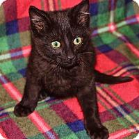 Adopt A Pet :: Pence - Lansing, KS