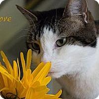 Adopt A Pet :: Smore - Chester, MD