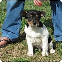 Adopt A Pet :: Trudel - Westbrook, CT