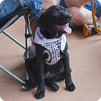Adopt A Pet :: Winnie - Minneola, FL