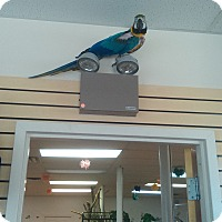 Adopt A Pet :: Kiwi - Villa Park, IL