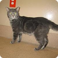 Adopt A Pet :: Dante - Cumming, GA