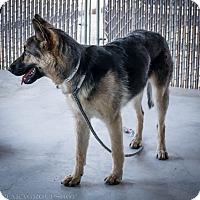 Adopt A Pet :: VERONICA - Phoenix, AZ