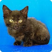 Adopt A Pet :: Fry - Carencro, LA
