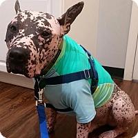 Adopt A Pet :: Pinky - Pittsburgh, PA