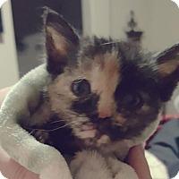 Adopt A Pet :: Vegas - Mesa, AZ