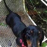 Adopt A Pet :: China - Pearland, TX