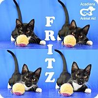 Adopt A Pet :: Fritz - Carencro, LA