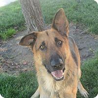 Adopt A Pet :: Wesley - Meridian, ID