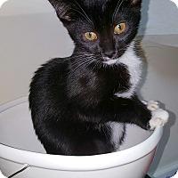 Adopt A Pet :: Kismet - Marietta, GA