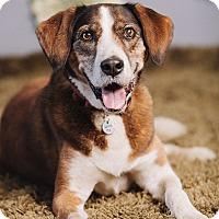 Adopt A Pet :: Henning - Portland, OR