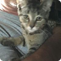 Adopt A Pet :: Lu Lu - Caro, MI