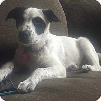 Adopt A Pet :: Sara - Denver, CO
