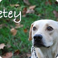 Adopt A Pet :: Petey - Minneola, FL